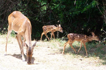 Wildlife at Shady Oaks RV